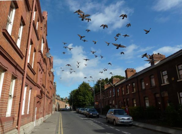 Thomas Court in Dublin 8, Houses and cars and a lot of doves starting to fly